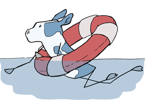 cow in a life preserver trying to swim